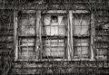 nature,reclamation,rust,belt,old,window