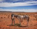 iverson,new,found,horse,navajo,rez