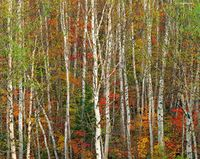 autumn,transition,maine