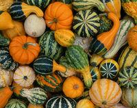 harvest,nuggets,illinois