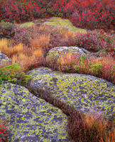 granite,toprock,lichens,maine,autumn