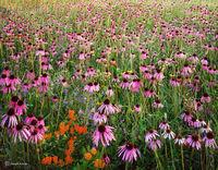 prairie,explosion,illinois,tallgrass
