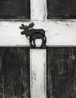 moose,barn,door,maine