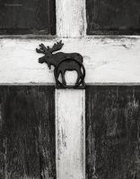 moose,barn,door,maine