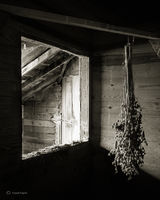 drying,seedheads,illinois,barn,interior
