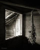 drying,seedheads,illinois,barn,interior