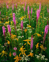 prairie,gift,illinois,wildflowers
