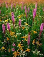 prairie,gift,illinois,wildflowers
