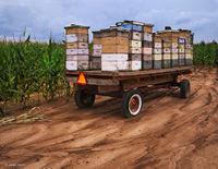 beekeeper,field,indiana,farm