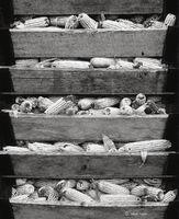 corn,crib,indiana,farm
