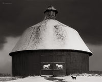 round,barn,winter,dog,michigan