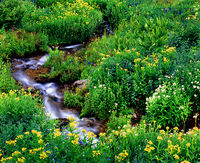 high,alpine,rocky,mountain,wildflowers,stream,flat,tops,wilderness,colorado