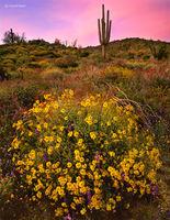 desert,gift,arizona,desert,dusk