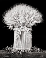 sheaf,wheat,illinois,farmhouse