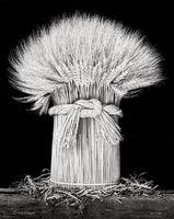 sheaf,wheat,illinois,farmhouse