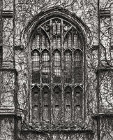 gothic,window,chicago