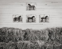 vermont,horse,barn,new,england