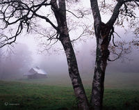 old,sugar,house,in,fog,vermont