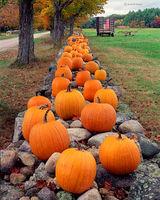 pumpkin,wall,new,england