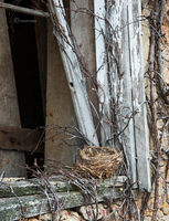the,bird,nest,illinois