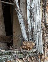 the,bird,nest,illinois