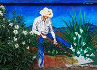 cowboy,gardener,arizona