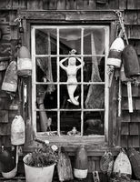 mermaid,maine,fisherman,shack,window