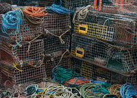 maine,lobster,traps