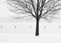winter,survivor,lone,tree,lake,michigan,shoreline,chicago
