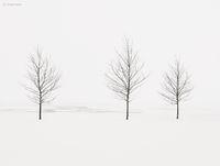 trees,shoreline,frozen,lake,michigan,chicago,polar,vortex