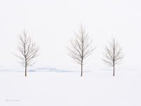 chicago,lake,michigan,trees,frozen,shoreline