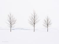 chicago,lake,michigan,trees,frozen,shoreline