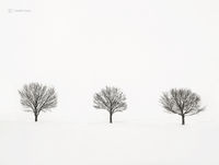 solitude,trees,shoreline,frozen,lake,michigan,polar,vortex,chicago