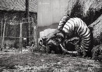 ROA,big,horn,sheep,chicago,street,art