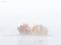 misty,morning,kayaker,fog,vermont,pond