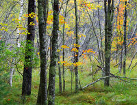autumn,commences,acadia,national,park,maine