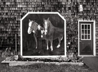 maune,garden,horse,mural