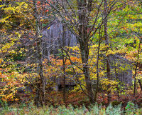 new,england,vermont,barn,woods,fall,foliage