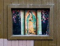 virgin,lady,guadalupe,window,christmas,lights,chicago