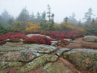 granite,toprocks,wild,blueberries,foggy,morning,cadillac,mountain