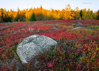 maine,blueberry,field,boulder,sunset