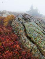 Granite Formation & Low Sweet Blueberries