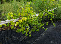 on,the,vine,abandoned,tennis,court