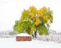 old,navajo,hogan,snow,cottonwood,tree,hubbell,trading,post,Ganado,arizona
