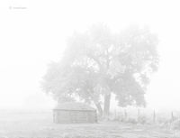 old,navajo,hogan,cottonwood,tree,fog,hubbell,trading,post
