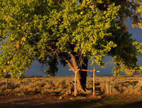 old,cottonwood,tree,sunrise,hubbell,trading,post