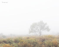lone,tree,fence,foggy,morning,navajoland,hubbell,trading,post