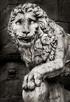 into,the,renaissance,lion,statue,florence,italy