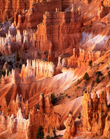 hoodoos,dawn,colorado,plateau,bryce,canyon