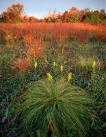 prairie,autumn,illinois,tallgrass